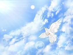 自由な鳥001.jpg